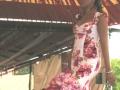 Presentación vestidos Carmen Acedo 2008 (5)